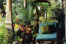 Garden - Veranda - Plants - Flowers - Outdoor living