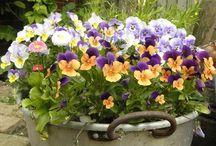 composizioni fiori freschi e piante