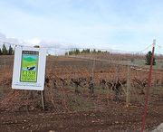 Sustainable Wineries / Those wineries that utilize green practices