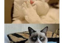 Grumpy Cat....love this cat!!!