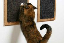 for kitties