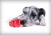 Doggie play time / by Leta Steffen