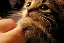 AWWW!! Cute Kitties