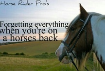 Horse & Rider Sayings!