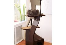 Thing's to buy for my kitty babies!
