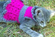 roupa de gatos