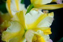 orchids and bonsai / by Nabina Vajracharya