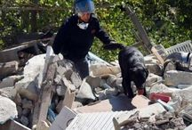 Cani che salvano delle vite