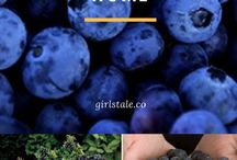 Blueberry Planting Guides and Recipes