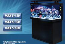 Aquarium Tanks / Aqua Dreams Aquarium carries different aquarium tank designs of freshwater aquarium, saltwater aquarium, and reef aquarium.  #aquariums #aquarium #fishtank #saltwatertank #reeftank #marinefish #sealife #fishtank #reefaquarium