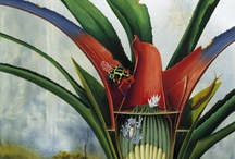 art of flora and fauna / mostly flora a few fauna in art / by Gail Siptak