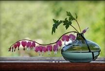 Gardening Ideas / by Jackie Maldonado