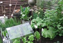Herb and vegetable garden / Herb and vegetable garden