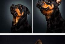 koirat ideat
