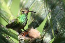 Hummingbirds / by Alice Hartman
