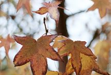 Indigo Autumn / Crunchy leaves, chilly evenings and all the colours of the autumn. Get inspired for the golden season.