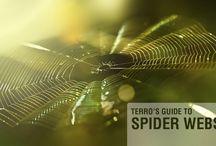 Spider Information & Control