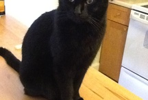 Black Cats are precious / by Joelle Groff