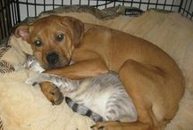 Animali / Cuccioli