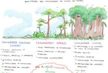 estudo ecologia