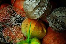 Yaprak ve meşe palamutu