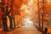 Autumn Colors / Some ideas where to go to see the most beautiful autumn colors