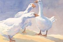 водяные  птицы