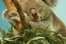 Fotografía Animal - Marsupiales