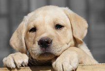 My Pups / by Natalie Navratil