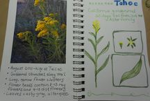Once a Month Nature Journal Project / I have created this Pinterest Board for journal page examples as part of the Once a Month Nature Journal Project. I will label each entry with the prompt that describes it best for future reference. If you would like to contribute to the board, you will need to follow this Pinterest Board and then leave me a comment letting me know you want to be added. Important: If you contribute to the board, you need to include in your description the prompt it is featuring.