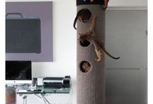 Cat trees and animal stuff