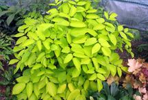 """Shade Plants We Love #ShadePlants / Step one: admit you have a """"shade problem"""". Step two: stop looking at all the sun loving perennials and annuals. Step three: get yourself to the nursery for an in person, live, eye opening tour of our shade selections!"""
