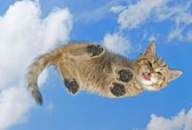 #CloudKittens / Clouds that look like Kittens (And Vice Versa)