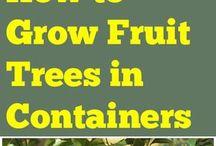 citrom termesztése, igényei