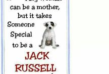 Jack Russel / De leukste, liefste Jacks