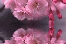 Pink  / by Vanessa Cunningham
