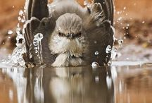 Our feathered friends / by Heather Stevens
