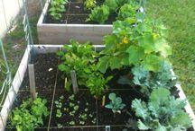 Growing / My kitchen garden