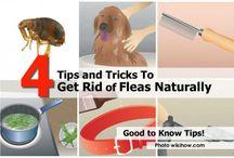 Home tips DIY