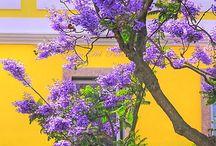 Color - Purple / by Ann Engert