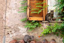 Cats Around Europe / by Jessamyn Smallenburg