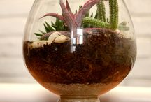 Terrarium (Bottle Garden) / Amazing concept of getting a garden inside a bottle. Checkout for more Terrariums at www.mudfingers.com