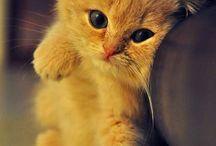 I love all animal! / Best friend! / by Cybill Summer