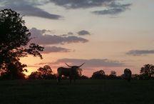 Beautiful Ranches