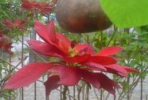 ♥ Jardim da minha Mãe! / No jardim da Dª Zeli tem....de tudo. Ela tem uma mão mágica para plantar qualquer coisa.