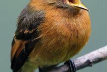 vogels tekenideetjes (birds)