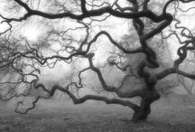Baum / The power of a tree as the language of nature.
