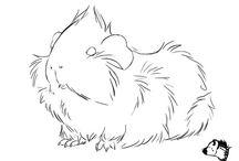Marsut / Guinea pigs