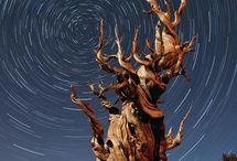 Cosmos / The Great Beyond / by María Ortega