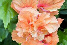 Flores y más flores⚘